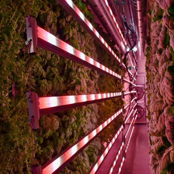 New farm growing fresh greens year-round